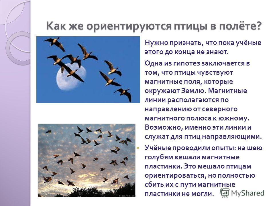 Как же ориентируются птицы в полёте ? Нужно признать, что пока учёные этого до конца не знают. Одна из гипотез заключается в том, что птицы чувствуют магнитные поля, которые окружают Землю. Магнитные линии располагаются по направлению от северного ма