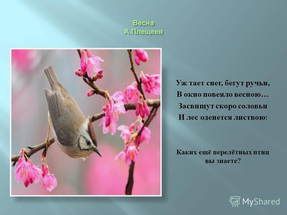 Уж тает снег, бегут ручьи, В окно повеяло весною … Засвищут скоро соловьи И лес оденется листвою ! Каких ещё перелётных птиц вы знаете ?