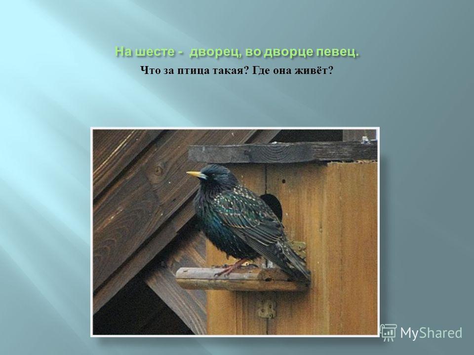 Что за птица такая ? Где она живёт ?