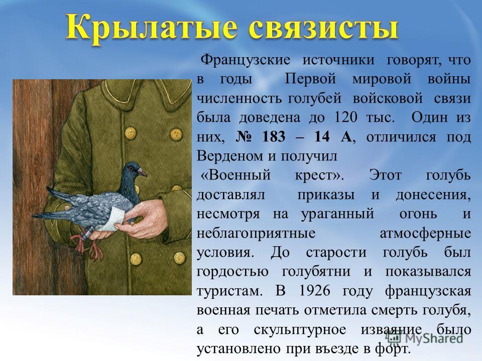 Французские источники говорят, что в годы Первой мировой войны численность голубей войсковой связи была доведена до 120 тыс. Один из них, 183 – 14 А, отличился под Верденом и получил «Военный крест». Этот голубь доставлял приказы и донесения, несмотр