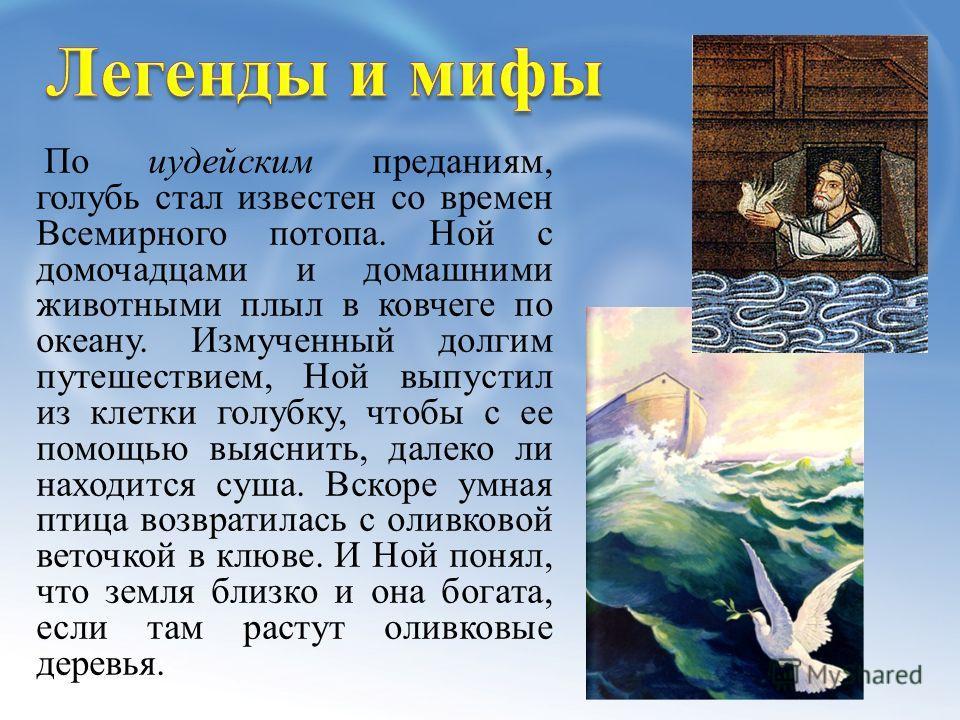 По иудейским преданиям, голубь стал известен со времен Всемирного потопа. Ной с домочадцами и домашними животными плыл в ковчеге по океану. Измученный долгим путешествием, Ной выпустил из клетки голубку, чтобы с ее помощью выяснить, далеко ли находит