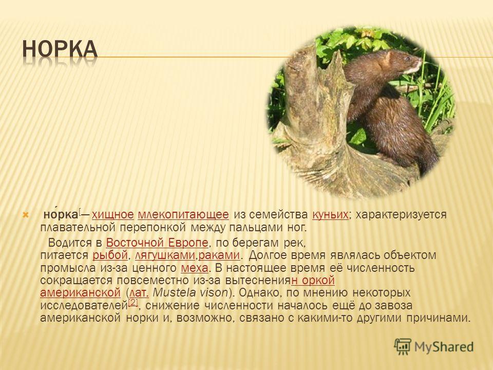 норка [ хищное млекопитающее из семейства куньих; характеризуется плавательной перепонкой между пальцами ног.хищноемлекопитающеекуньих Водится в Восточной Европе, по берегам рек, питается рыбой, лягушками,раками. Долгое время являлась объектом промыс