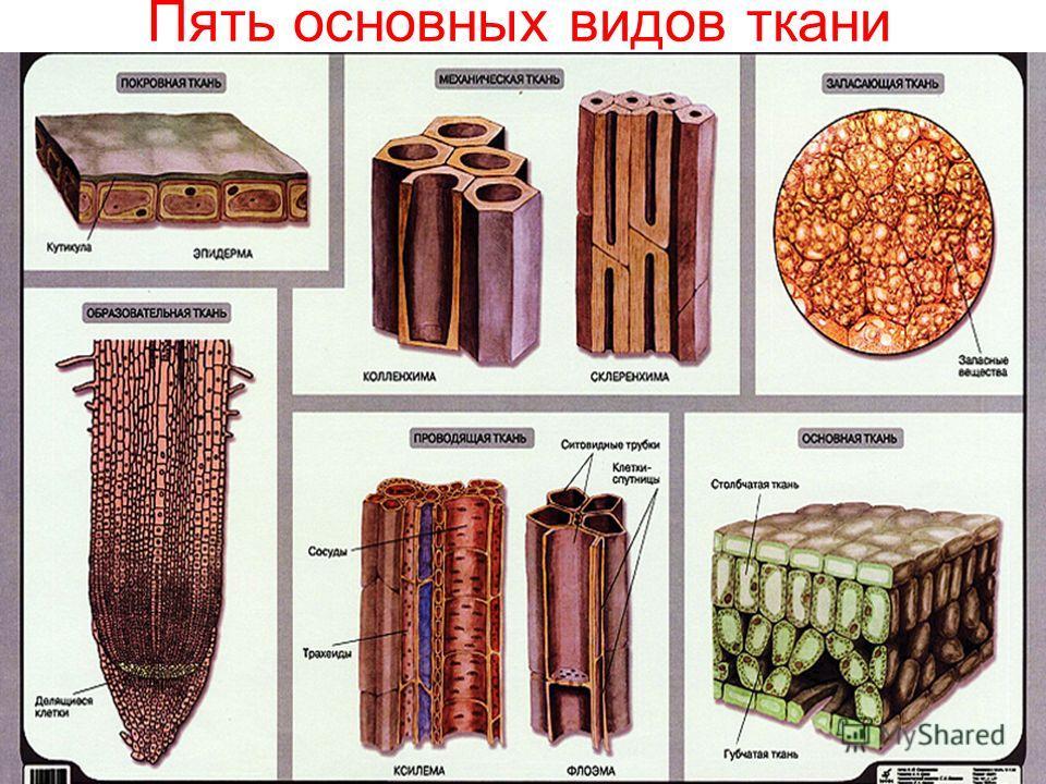 Пять основных видов ткани