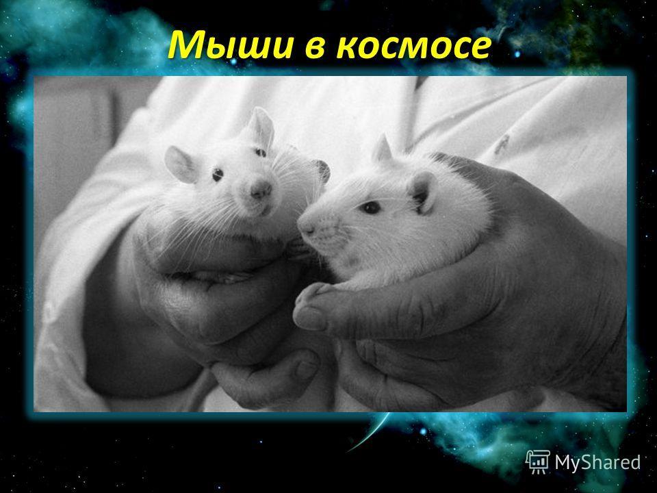 Мыши в космосе