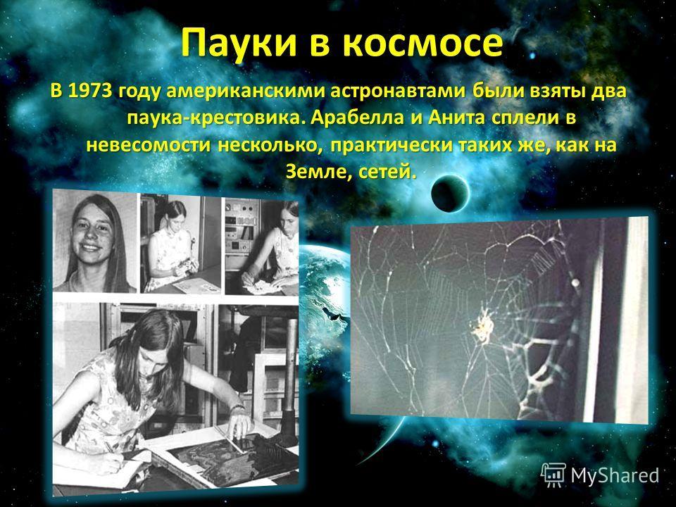 Пауки в космосе В 1973 году американскими астронавтами были взяты два паука-крестовика. Арабелла и Анита сплели в невесомости несколько, практически таких же, как на Земле, сетей.
