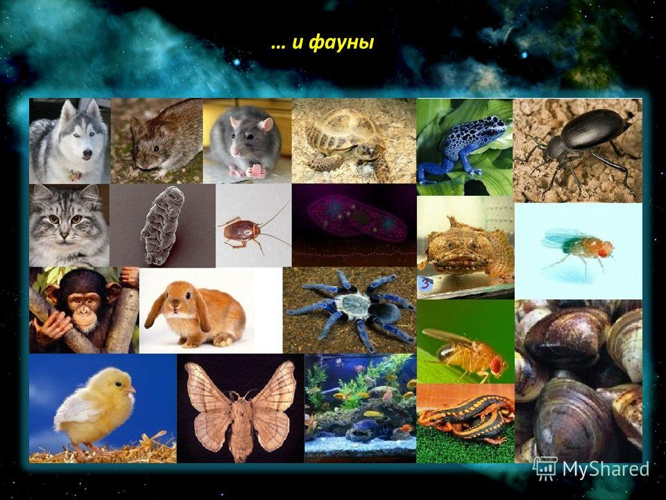 … и фауны