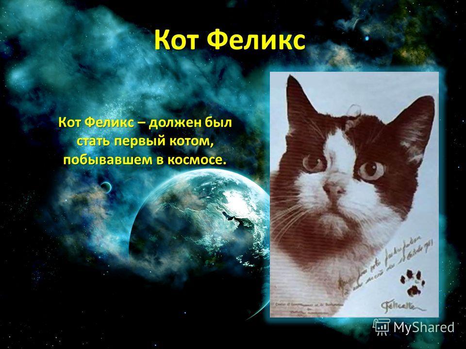 Кот Феликс Кот Феликс – должен был стать первый котом, побывавшем в космосе.