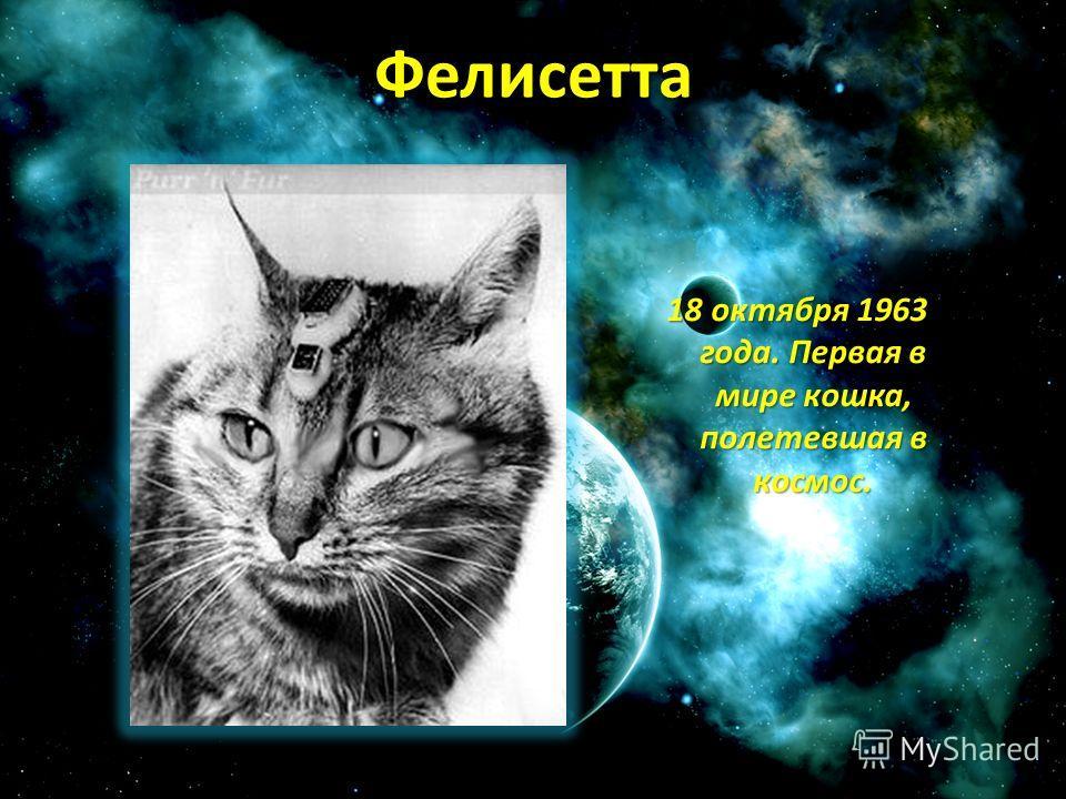 Фелисетта 18 октября 1963 года. Первая в мире кошка, полетевшая в космос. 18 октября 1963 года. Первая в мире кошка, полетевшая в космос.
