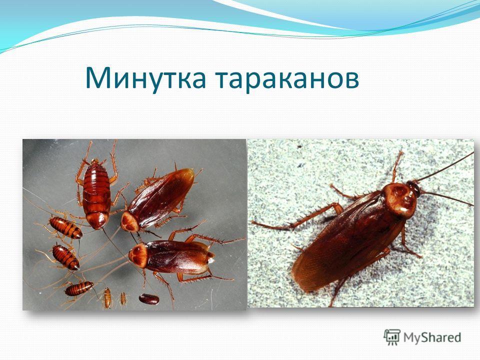 Минутка тараканов
