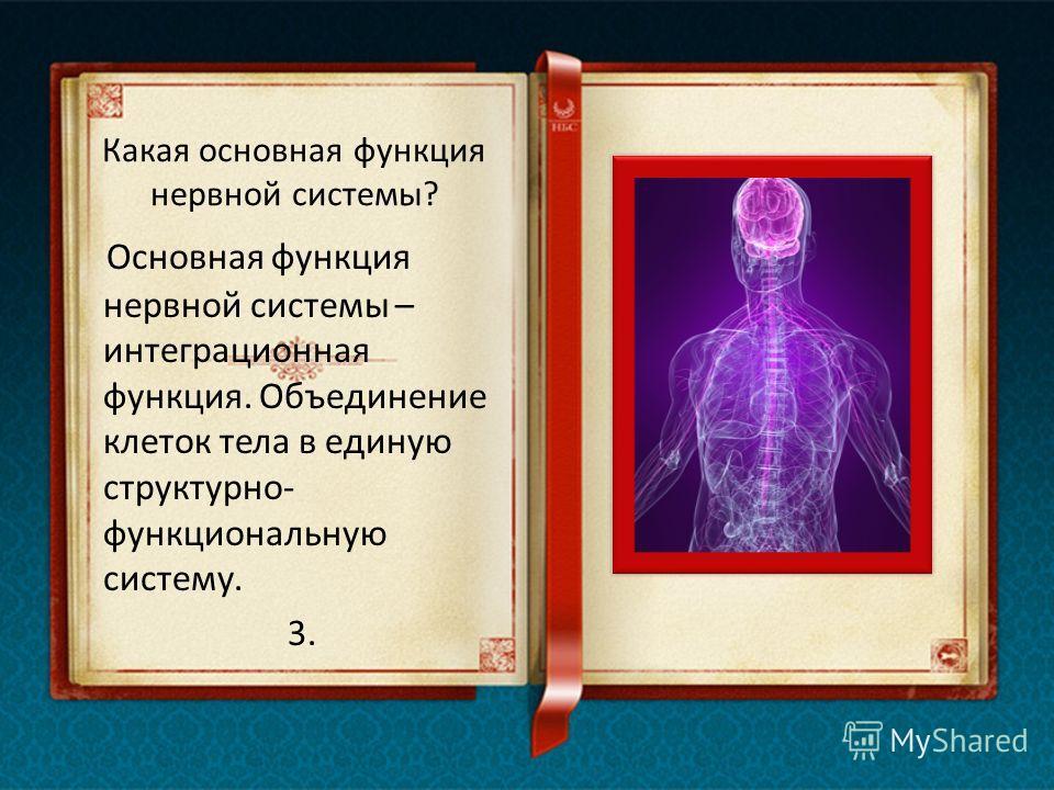 Как и когда формируется нервная система? На третьей неделе эмбрионального развития у будущего младенца начинает формироваться нервная система, образуя некое подобие трубки. Начиная с четвертой недели можно наблюдать некоторую активность головного моз