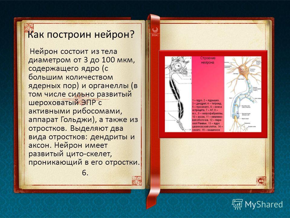 Какие функции у нейронов? Как и другие клетки, нейроны должны обеспечивать поддержание собственной структуры и функций, приспосабливаться к изменяющимся условиям и оказывать регулирующее влияние на соседние клетки. Однако основная функция нейронов -