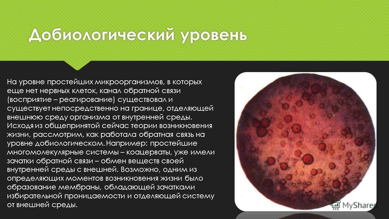 Добиологический уровень На уровне простейших микроорганизмов, в которых еще нет нервных клеток, канал обратной связи (восприятие – реагирование) существовал и существует непосредственно на границе, отделяющей внешнюю среду организма от внутренней сре