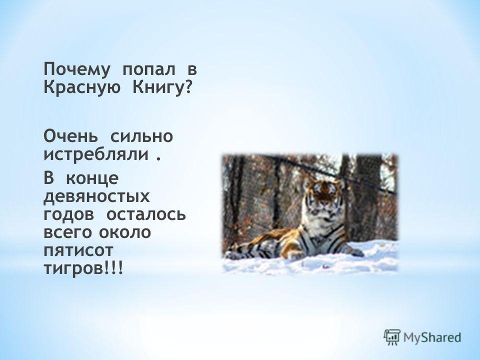 Почему попал в Красную Книгу? Очень сильно истребляли. В конце девяностых годов осталось всего около пятисот тигров!!!
