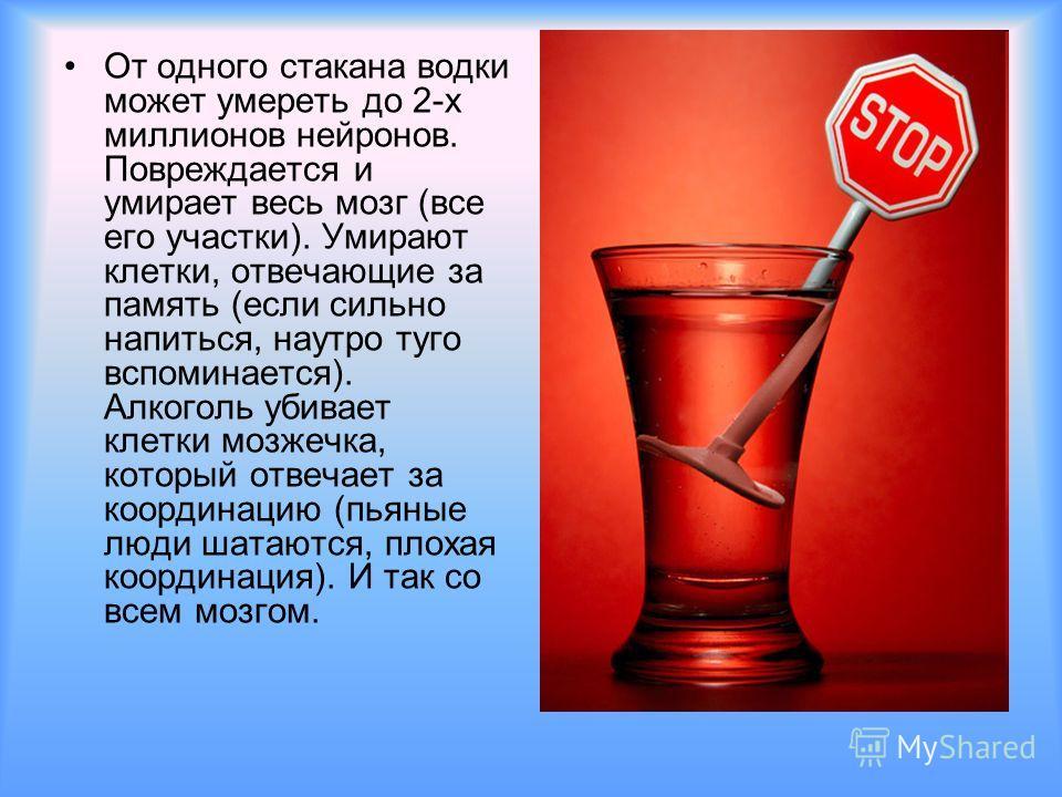 От одного стакана водки может умереть до 2-х миллионов нейронов. Повреждается и умирает весь мозг (все его участки). Умирают клетки, отвечающие за память (если сильно напиться, наутро туго вспоминается). Алкоголь убивает клетки мозжечка, который отве