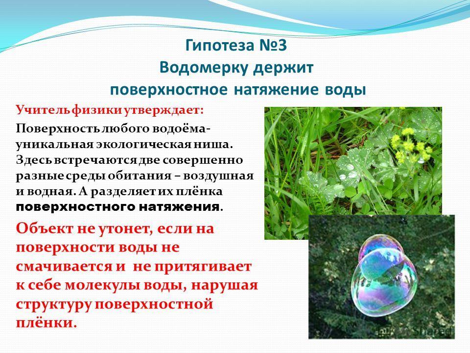 Гипотеза 3 Водомерку держит поверхностное натяжение воды Учитель физики утверждает: Поверхность любого водоёма- уникальная экологическая ниша. Здесь встречаются две совершенно разные среды обитания – воздушная и водная. А разделяет их плёнка поверхно
