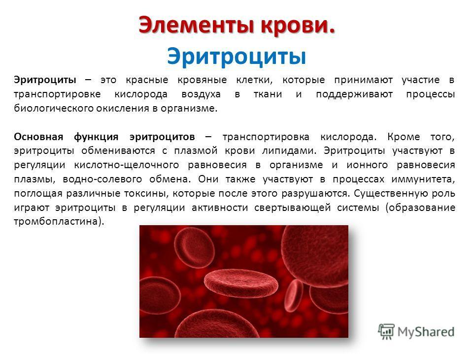 Элементы крови. Элементы крови. Эритроциты Эритроциты – это красные кровяные клетки, которые принимают участие в транспортировке кислорода воздуха в ткани и поддерживают процессы биологического окисления в организме. Основная функция эритроцитов – тр