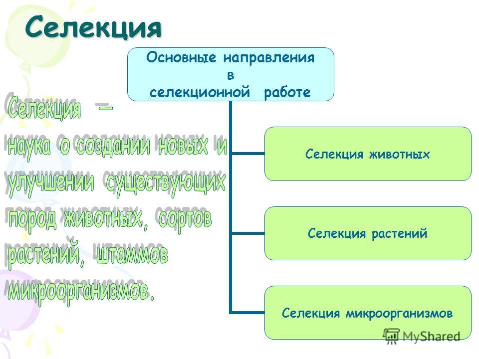 Селекция Основные направления в селекционной работе Селекция животных Селекция растений Селекция микроорганизмов