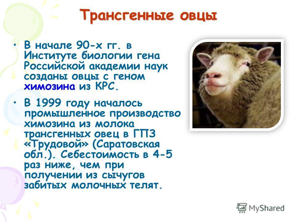 В начале 90-х гг. в Институте биологии гена Российской академии наук созданы овцы с геном химозина из КРС. В 1999 году началось промышленное производство химозина из молока трансгенных овец в ГПЗ «Трудовой» (Саратовская обл.). Себестоимость в 4-5 раз