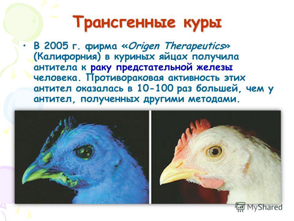 В 2005 г. фирма «Origen Therapeutics» (Калифорния) в куриных яйцах получила антитела к раку предстательной железы человека. Противораковая активность этих антител оказалась в 10-100 раз большей, чем у антител, полученных другими методами. Трансгенные