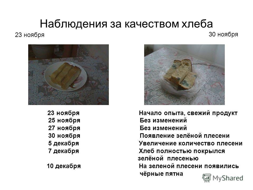 Наблюдения за качеством хлеба 23 ноября Начало опыта, свежий продукт 25 ноября Без изменений 27 ноября Без изменений 30 ноября Появление зелёной плесени 5 декабря Увеличение количество плесени 7 декабря Хлеб полностью покрылся зелёной плесенью 10 дек