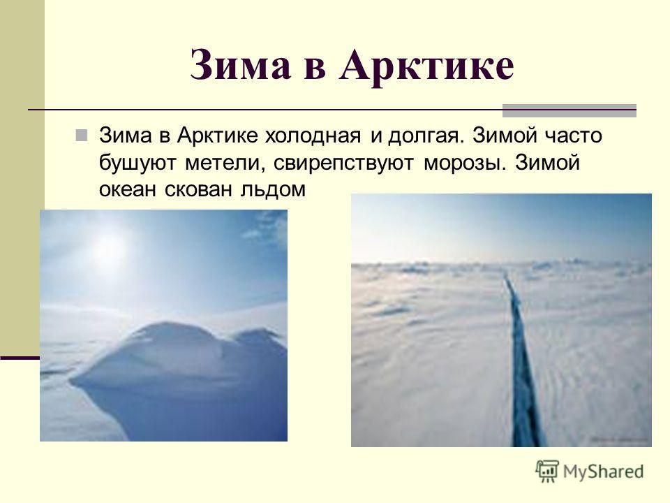 Зима в Арктике Зима в Арктике холодная и долгая. Зимой часто бушуют метели, свирепствуют морозы. Зимой океан скован льдом
