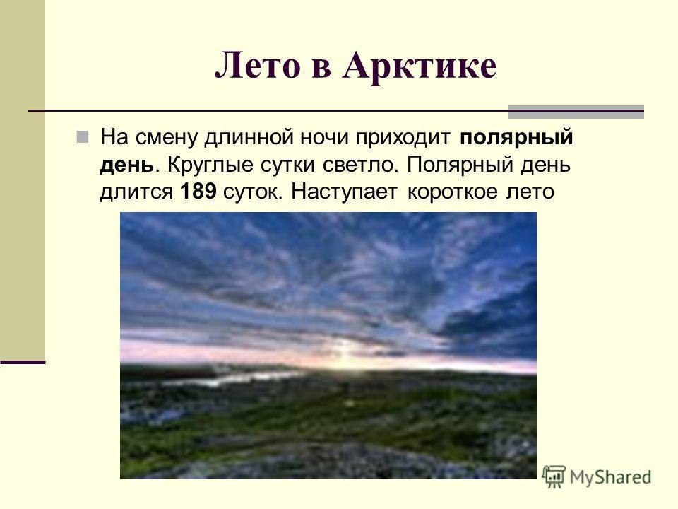 Лето в Арктике На смену длинной ночи приходит полярный день. Круглые сутки светло. Полярный день длится 189 суток. Наступает короткое лето