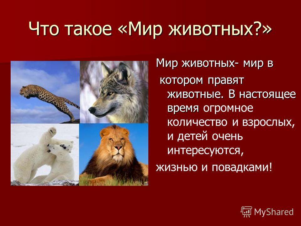 Что такое «Мир животных?» Мир животных- мир в котором правят животные. В настоящее время котором правят животные. В настоящее время огромное количество и взрослых, и детей очень интересуются, жизнью и повадками!