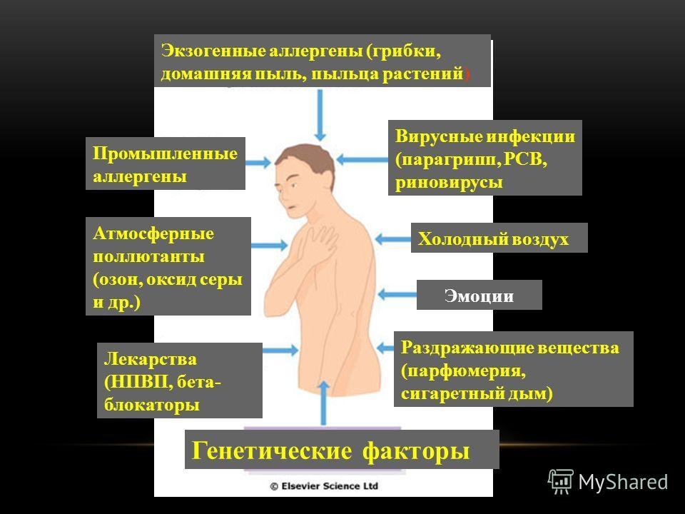 Экзогенные аллергены (грибки, домашняя пыль, пыльца растений) Промышленные аллергены Вирусные инфекции (парагрипп, РСВ, риновирусы Холодный воздух Эмоции Раздражающие вещества (парфюмерия, сигаретный дым) Генетические факторы Атмосферные поллютанты (