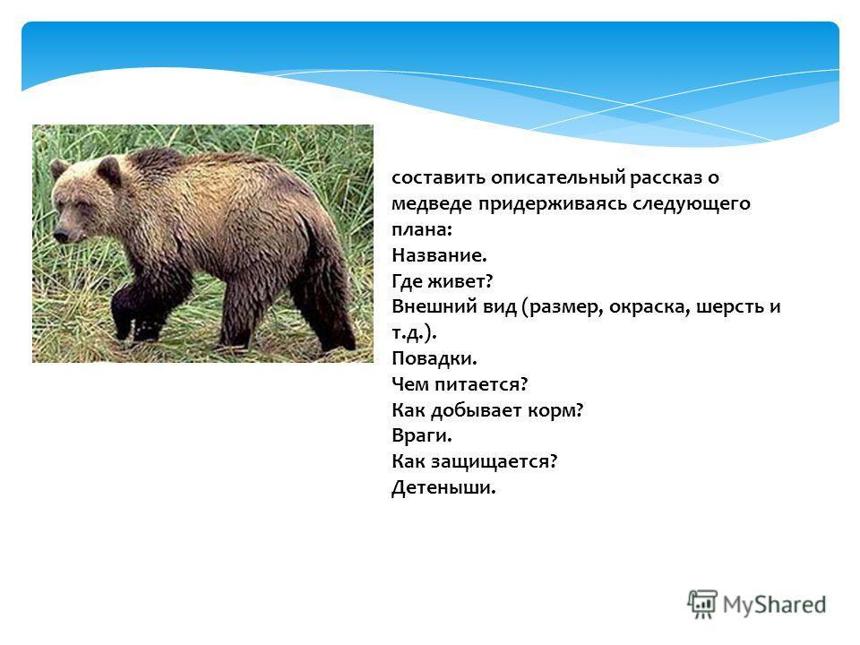 составить описательный рассказ о медведе придерживаясь следующего плана: Название. Где живет? Внешний вид (размер, окраска, шерсть и т.д.). Повадки. Чем питается? Как добывает корм? Враги. Как защищается? Детеныши.