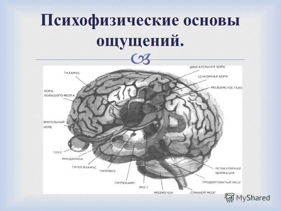 Психофизические основы ощущений.
