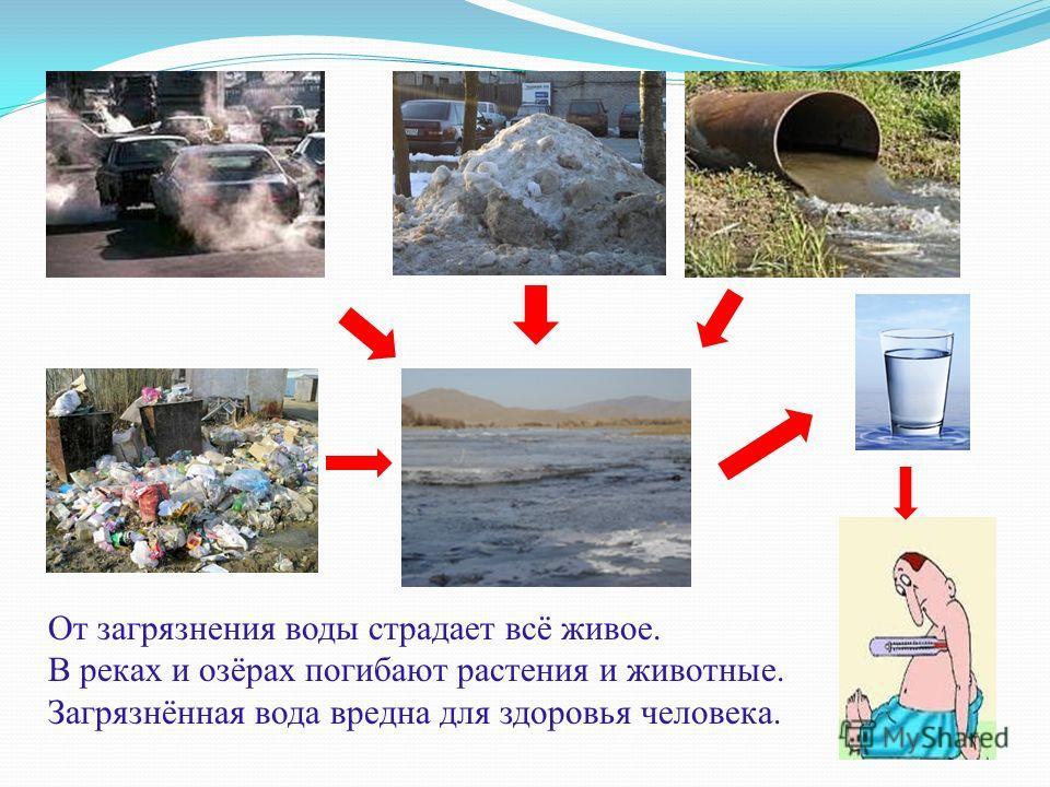 От загрязнения воды страдает всё живое. В реках и озёрах погибают растения и животные. Загрязнённая вода вредна для здоровья человека.