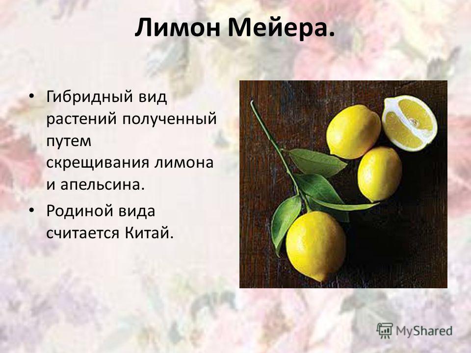 Лимон Мейера. Гибридный вид растений полученный путем скрещивания лимона и апельсина. Родиной вида считается Китай.