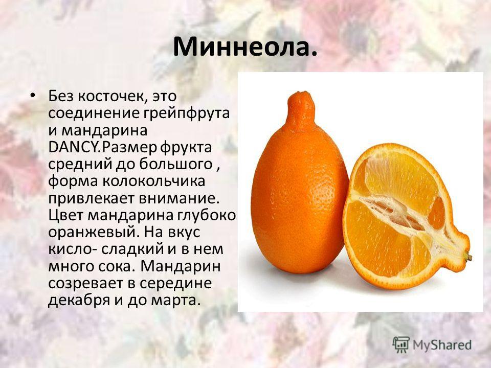 Миннеола. Без косточек, это соединение грейпфрута и мандарина DANCY.Размер фрукта средний до большого, форма колокольчика привлекает внимание. Цвет мандарина глубоко оранжевый. На вкус кисло- сладкий и в нем много сока. Мандарин созревает в середине
