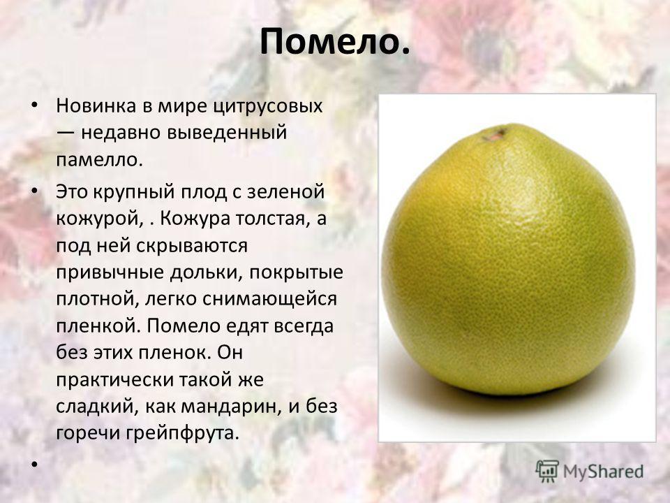 Помело. Новинка в мире цитрусовых недавно выведенный памелло. Это крупный плод с зеленой кожурой,. Кожура толстая, а под ней скрываются привычные дольки, покрытые плотной, легко снимающейся пленкой. Помело едят всегда без этих пленок. Он практически