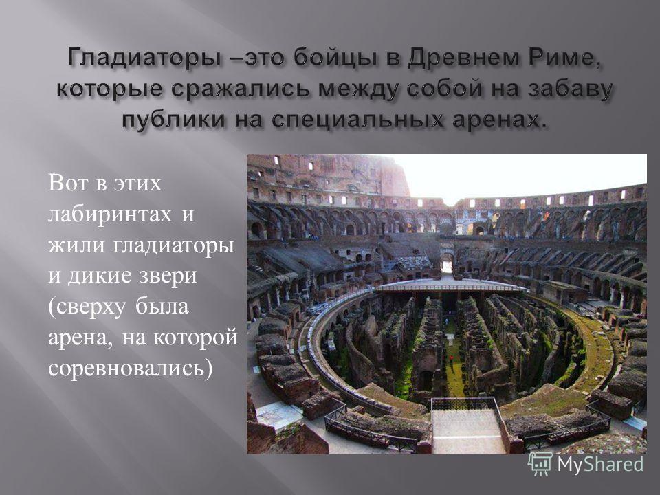 Вот в этих лабиринтах и жили гладиаторы и дикие звери ( сверху была арена, на которой соревновались )