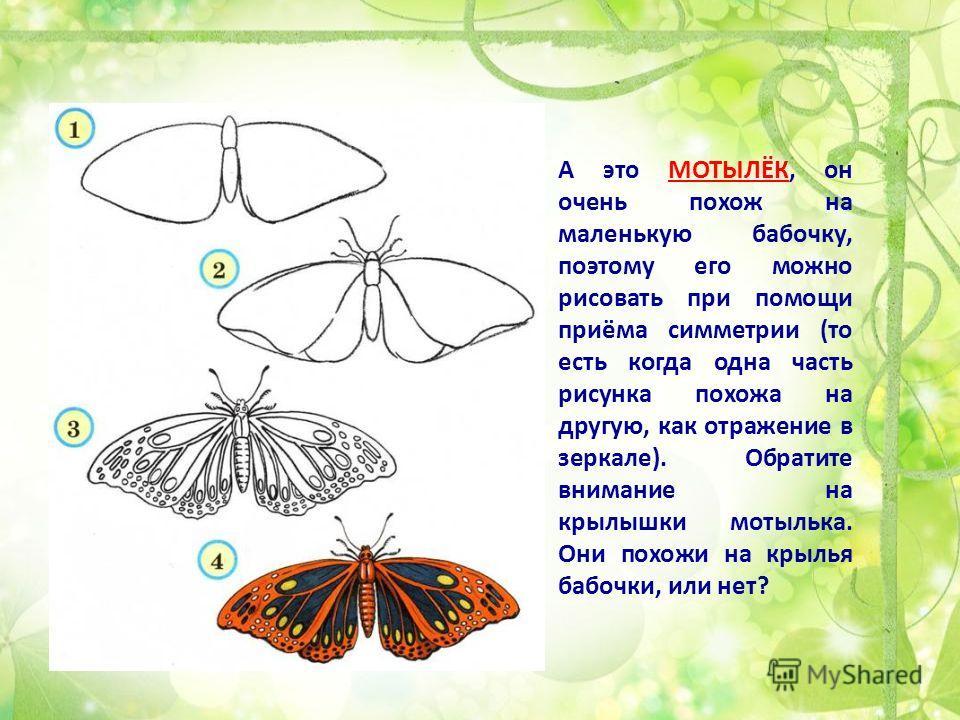 А это МОТЫЛЁК, он очень похож на маленькую бабочку, поэтому его можно рисовать при помощи приёма симметрии (то есть когда одна часть рисунка похожа на другую, как отражение в зеркале). Обратите внимание на крылышки мотылька. Они похожи на крылья бабо