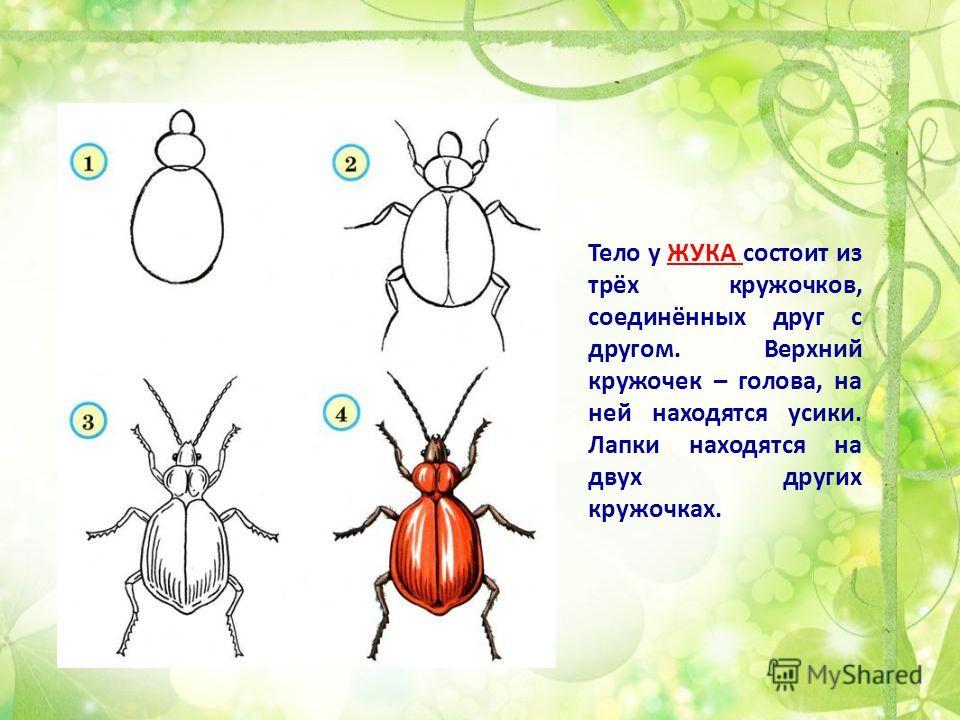 Тело у ЖУКА состоит из трёх кружочков, соединённых друг с другом. Верхний кружочек – голова, на ней находятся усики. Лапки находятся на двух других кружочках.