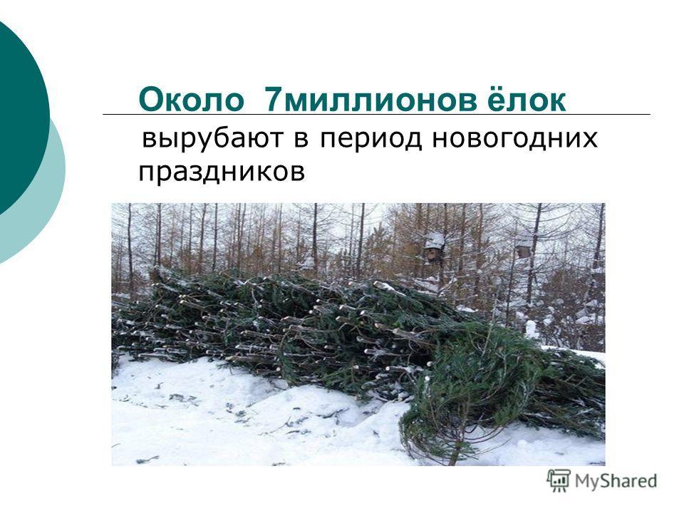 Около 7миллионов ёлок вырубают в период новогодних праздников
