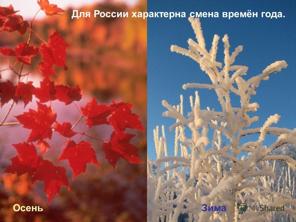 Для России характерна смена времён года. Осень Зима