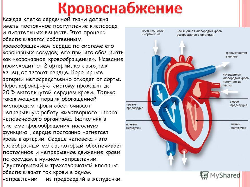 Каждая клетка сердечной ткани должна иметь постоянное поступление кислорода и питательных веществ. Этот процесс обеспечивается собственным кровообращением сердца по системе его коронарных сосудов; его принято обозначать как «коронарное кровообращение