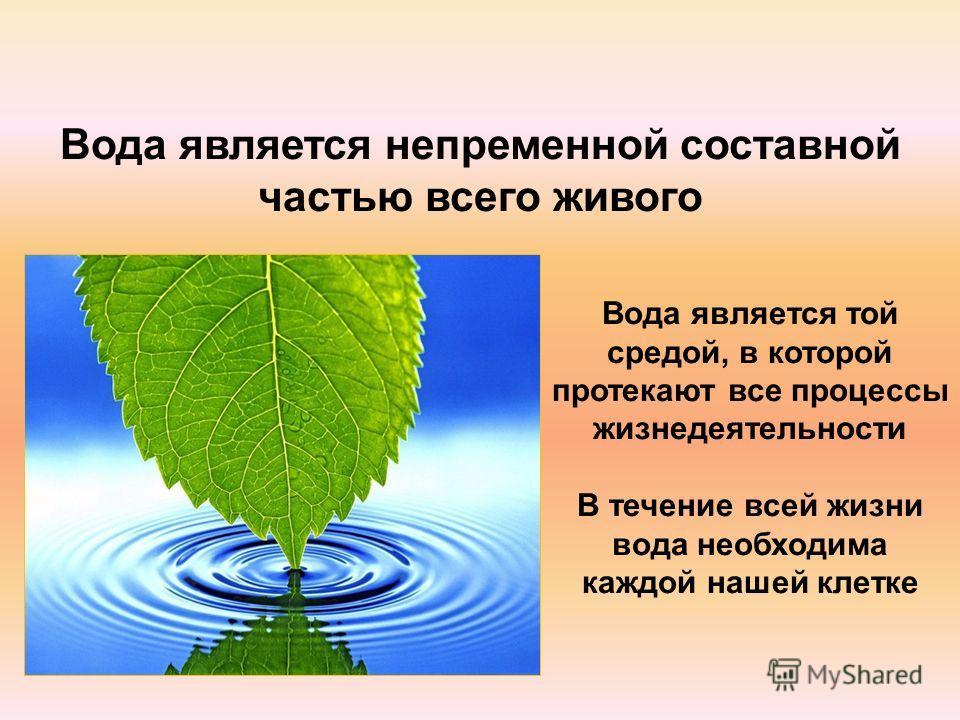 Вода является непременной составной частью всего живого Вода является той средой, в которой протекают все процессы жизнедеятельности В течение всей жизни вода необходима каждой нашей клетке