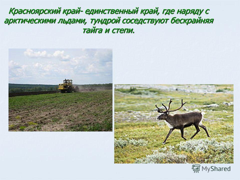 Красноярский край- единственный край, где наряду с арктическими льдами, тундрой соседствуют бескрайняя тайга и степи.