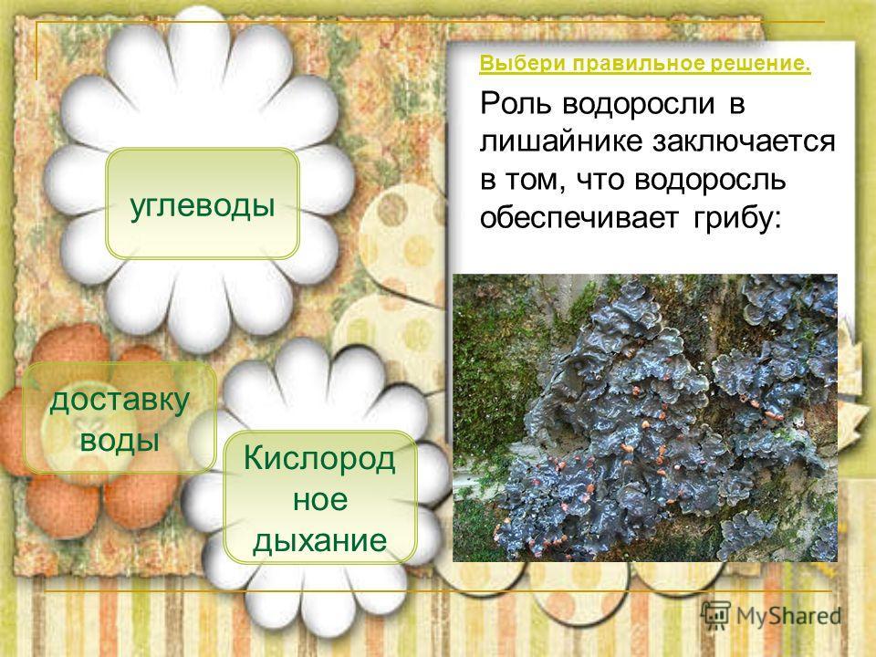 Роль водоросли в лишайнике заключается в том, что водоросль обеспечивает грибу: углеводы доставку воды Кислород ное дыхание Выбери правильное решение.