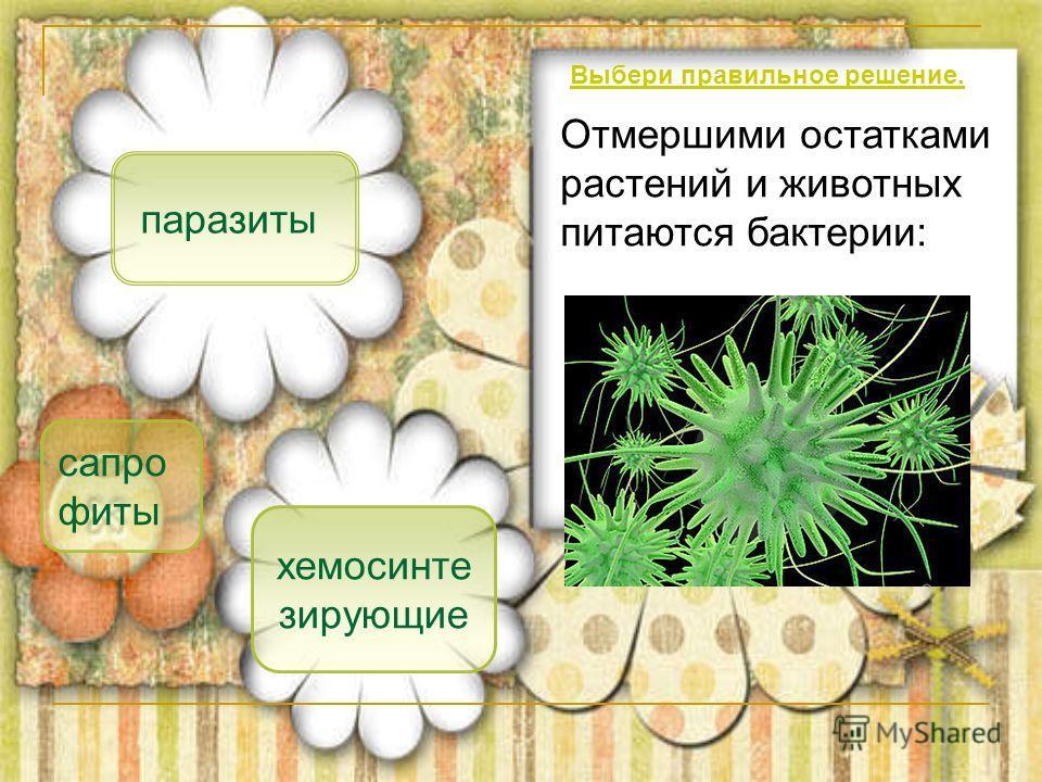 сапро фиты паразиты хемосинте зирующие Отмершими остатками растений и животных питаются бактерии: Выбери правильное решение.