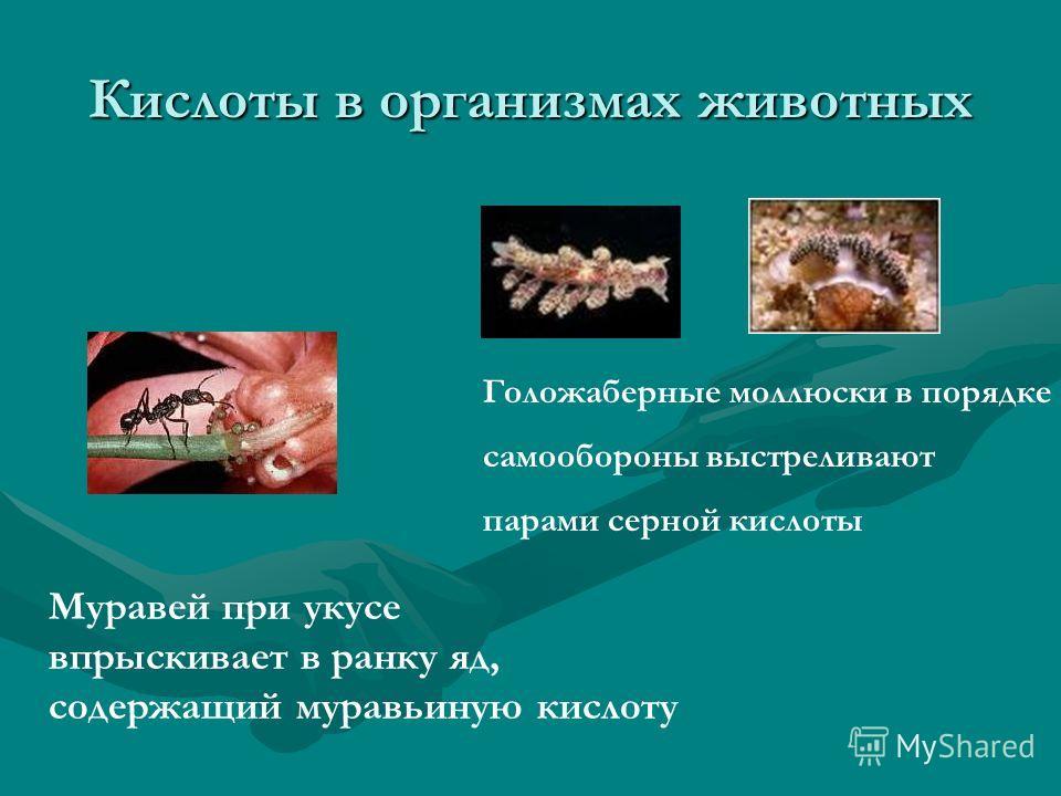 Кислоты в организмах животных Муравей при укусе впрыскивает в ранку яд, содержащий муравьиную кислоту Голожаберные моллюски в порядке самообороны выстреливают парами серной кислоты