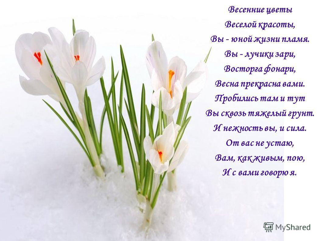 Весенние цветы Веселой красоты, Вы - юной жизни пламя. Вы - лучики зари, Восторга фонари, Весна прекрасна вами. Пробились там и тут Вы сквозь тяжелый грунт. И нежность вы, и сила. От вас не устаю, Вам, как живым, пою, И с вами говорю я.