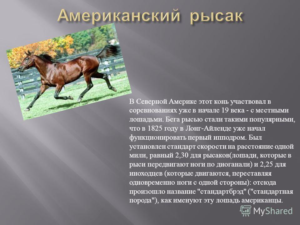 В Северной Америке этот конь участвовал в соревнованиях уже в начале 19 века - с местными лошадьми. Бега рысью стали такими популярными, что в 1825 году в Лонг - Айленде уже начал функционировать первый ипподром. Был установлен стандарт скорости на р