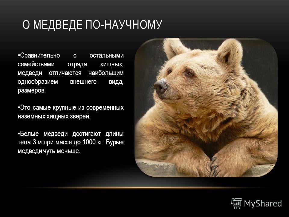 О МЕДВЕДЕ ПО-НАУЧНОМУ Сравнительно с остальными семействами отряда хищных, медведи отличаются наибольшим однообразием внешнего вида, размеров. Это самые крупные из современных наземных хищных зверей. Белые медведи достигают длины тела 3 м при массе д