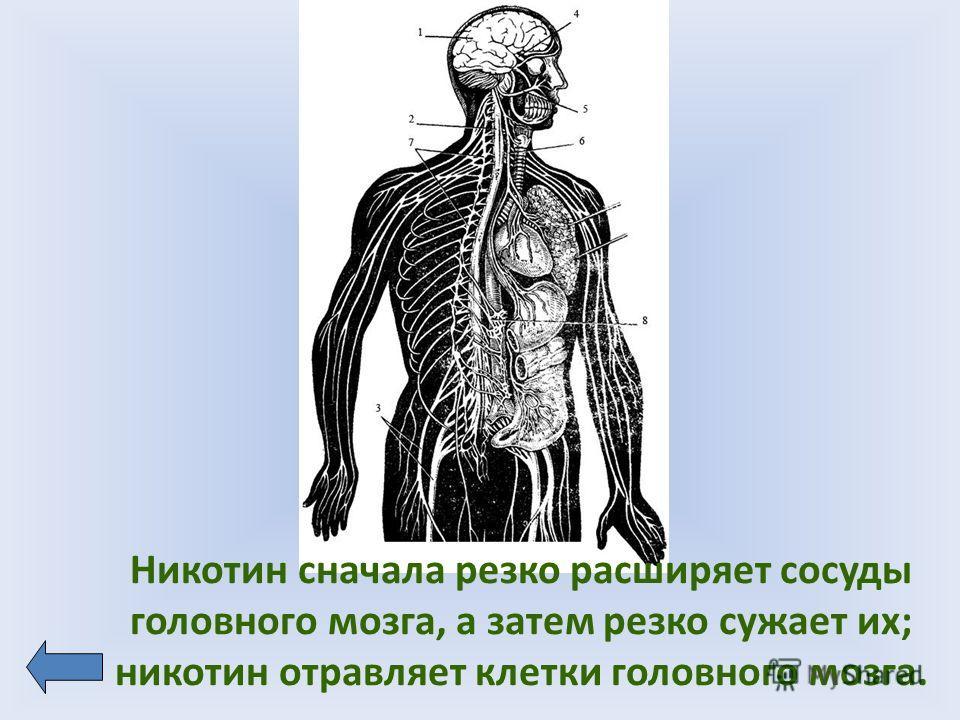Никотин сначала резко расширяет сосуды головного мозга, а затем резко сужает их; никотин отравляет клетки головного мозга.