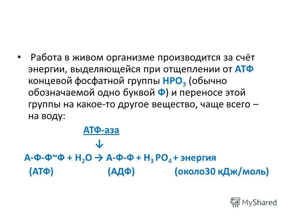 Работа в живом организме производится за счёт энергии, выделяющейся при отщеплении от АТФ концевой фосфатной группы НРО 3 (обычно обозначаемой одно буквой Ф) и переносе этой группы на какое-то другое вещество, чаще всего – на воду: АТФ-аза А-Ф-Ф~Ф +